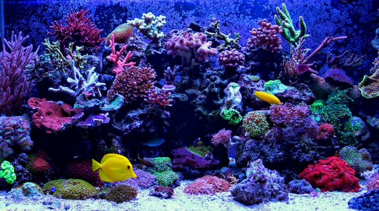 A colorful and vibrant coral reef with reef fish.