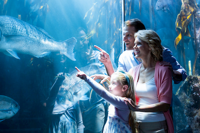 Family at the aquarium looking into a tank of fish
