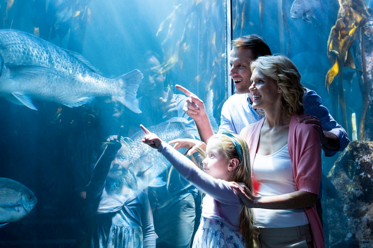 Family looking into fish tank at aquarium