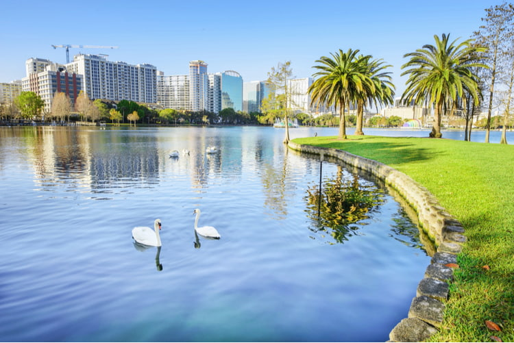 Orlando Florida lake with swans