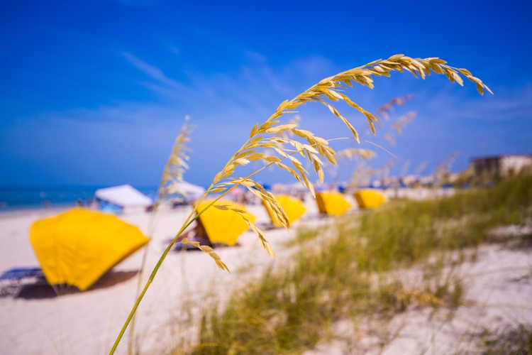 Sea oats and yellow umbrellas over lounging chairs at Madeira Beach