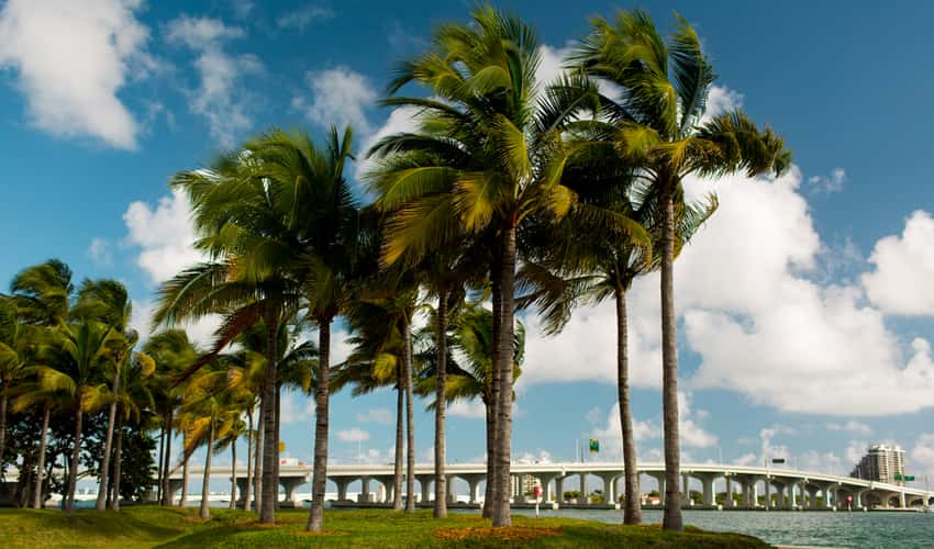 Palm trees in Bayfront Park
