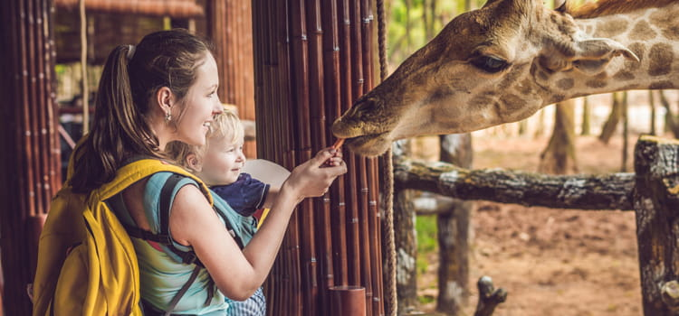 a mother and her child gently feed a giraffe at a zoo