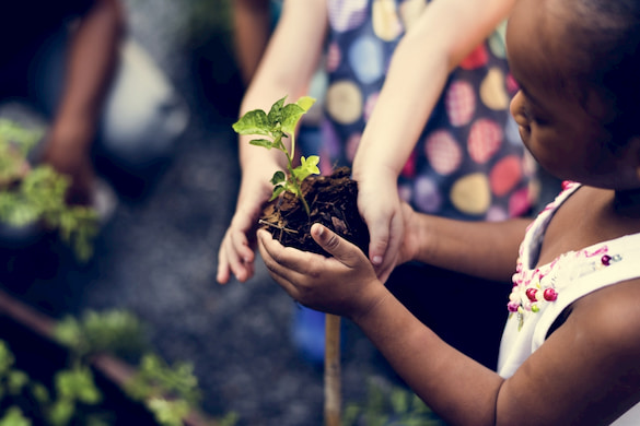 a child holds a seedling on a school field trip