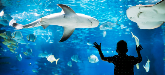 a child marvels at a tank of sharks and rays at the Florida Aquarium